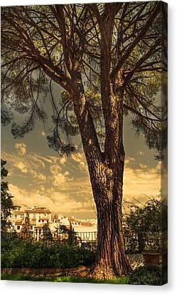 Pine Tree In The Secret Garden Canvas Print by Jenny Rainbow