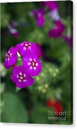 Pretty Flower Canvas Print by Patty Malajak
