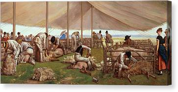 The Sheep Shearing Match Canvas Print by Eyre Crowe