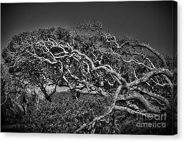 Trees Please Canvas Print by Richard Burr