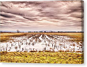 0704-8703 Winter Clouds At Holla Bend Wildlife Refuge Canvas Print by Randy Forrester