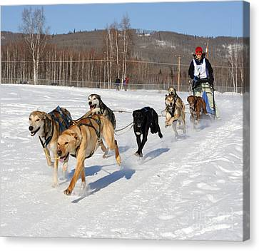2010 Limited North American Sled Dog Race Canvas Print by Gary Whitton