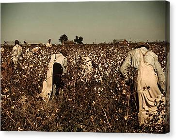 African American Day Laborers Picking Canvas Print by Everett