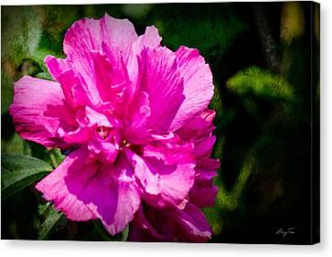 Althea Blossom Canvas Print by Barry Jones
