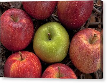 Apples Canvas Print by Joana Kruse