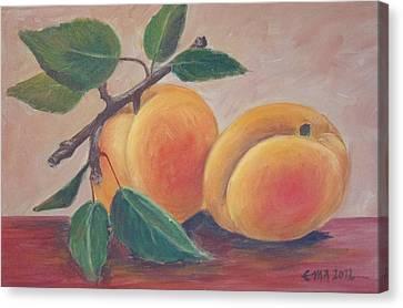 Apricot Canvas Print by Ema Dolinar Lovsin
