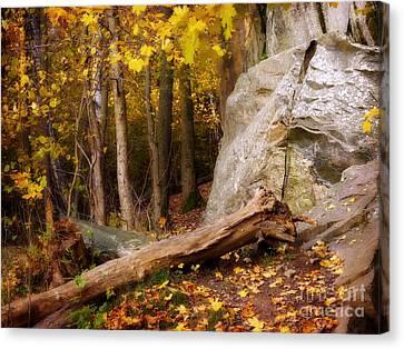 Autumn Forest Day Canvas Print by Lutz Baar