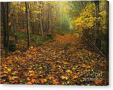 Autumn Lane Canvas Print by Mike  Dawson