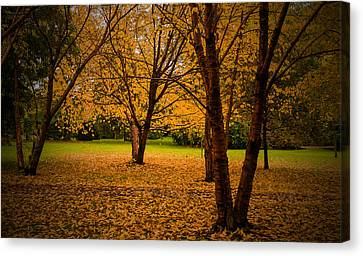 Autumn Canvas Print by Micael  Carlsson