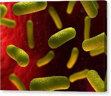 Bacterial Infection, Artwork Canvas Print by Sciepro