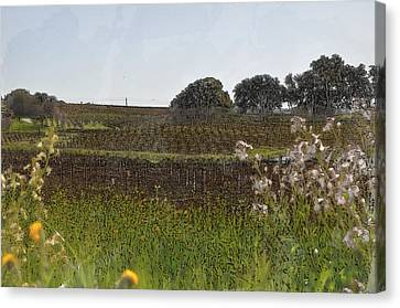 Beautiful California Vineyard Framed With Flowers Canvas Print by Brandon Bourdages