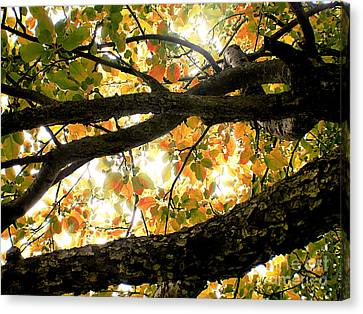Beneath The Autumn Wolf River Apple Tree Canvas Print by Angie Rea