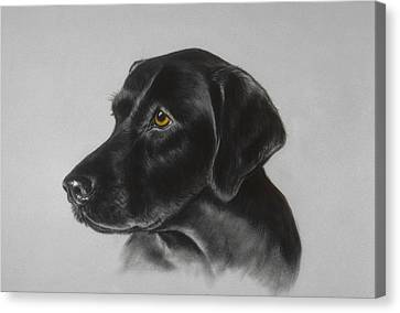 Black Labrador Canvas Print by Patricia Ivy