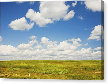 Blue Sky And Clouds Over Blueberry Field In Maine Canvas Print by Keith Webber Jr