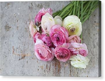 Bouquet Of Pink Ranunculus Canvas Print by Elin Enger