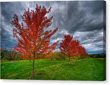 Bright Red Canvas Print by Mike Horvath
