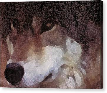 Brown Wolf Canvas Print by G Stewart