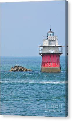Bug Light Canvas Print by Catherine Reusch  Daley