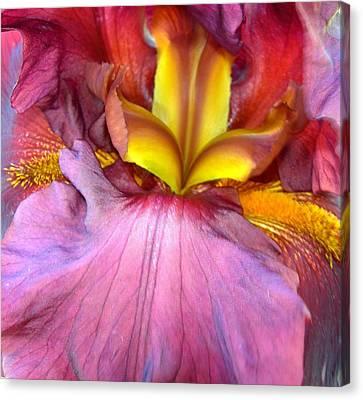 Burgundy Iris Canvas Print by Randy Rosenberger
