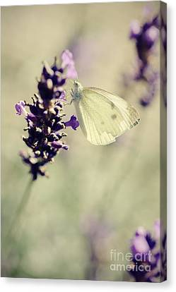 Butterfly.. Canvas Print by LHJB Photography