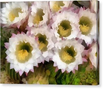 Cactus Flowers Canvas Print by Odon Czintos