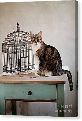 Cat And Bird Canvas Print by Nailia Schwarz