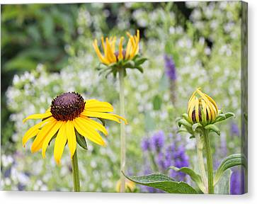 Circle Of Life Canvas Print by Becky Lodes