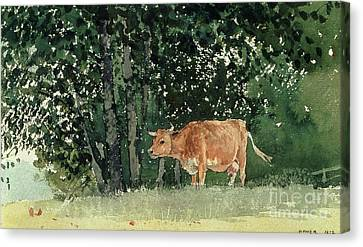 Cow In Pasture Canvas Print by Winslow Homer