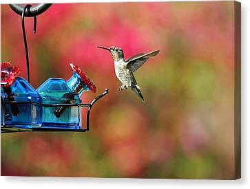 Dropping In Canvas Print by Lynn Bauer