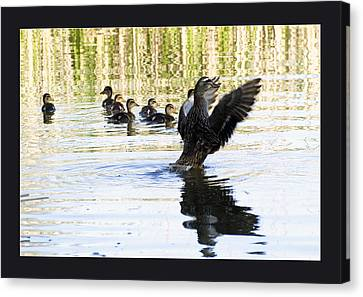 Duck Family Canvas Print by Odon Czintos