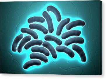 E-coli Cells Canvas Print by MedicalRF.com