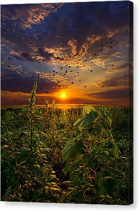 Early Bird Special Canvas Print by Phil Koch
