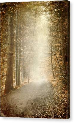 Early Morning Canvas Print by Svetlana Sewell