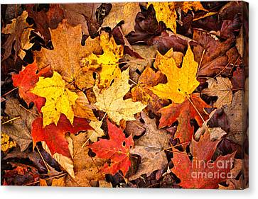 Fall Leaves Background Canvas Print by Elena Elisseeva