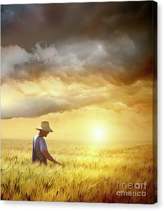 Farmer Checking His Crop Of Wheat  Canvas Print by Sandra Cunningham