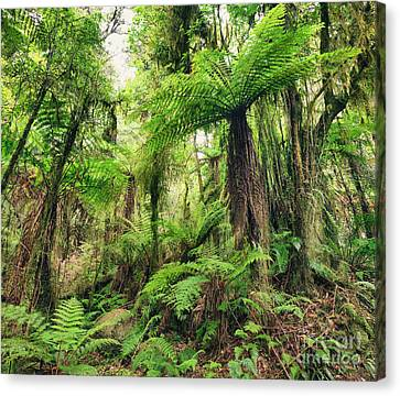 Fern Tree Canvas Print by MotHaiBaPhoto Prints