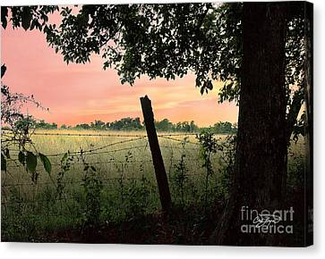 Field Of Dreams Canvas Print by Cris Hayes