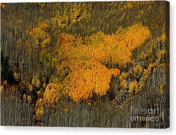 Fine Art Of Nature Canvas Print by Vicki Pelham