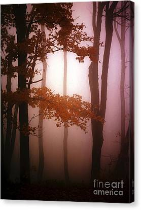 Foggy Misty Trees Canvas Print by Mike Nellums