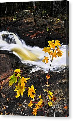 Forest River In The Fall Canvas Print by Elena Elisseeva