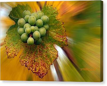 Grapes Canvas Print by Jean Noren