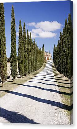 Gravel Road Lined With Cypress Trees Canvas Print by Jeremy Woodhouse