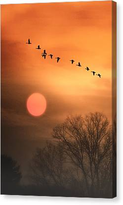 Hot Summer Flight Canvas Print by Tom York Images
