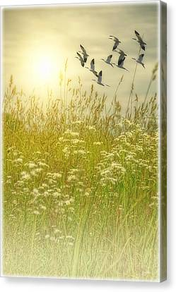 In God's Country Canvas Print by Tom York Images