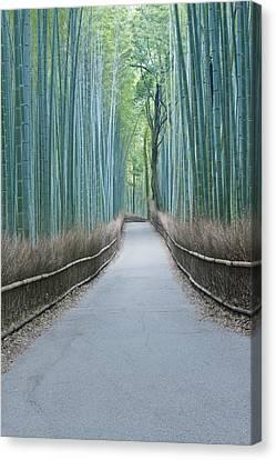 Japan Kyoto Arashiyama Sagano Bamboo Canvas Print by Rob Tilley