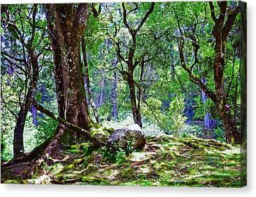 Kingdom Of The Trees. Peradeniya Botanical Garden. Sri Lanka Canvas Print by Jenny Rainbow
