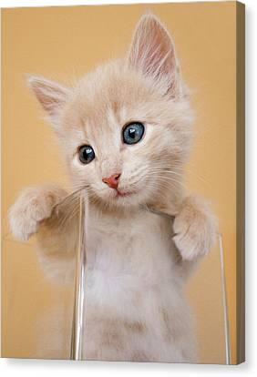 Kitten In Glass Vase Canvas Print by Sanna Pudas