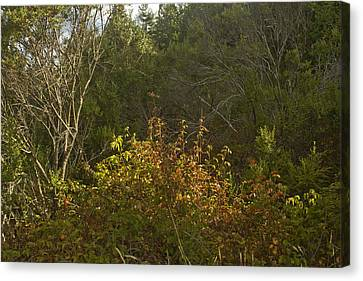 Last Of The Poison Oak Canvas Print by Larry Darnell