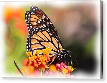 Monarch And Milkweed Canvas Print by Heidi Smith