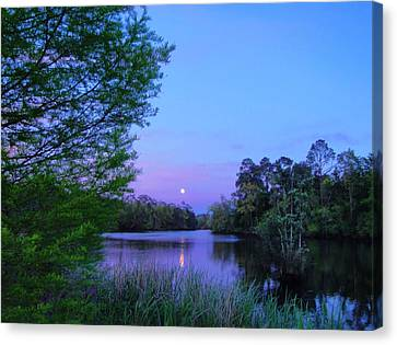Moon Over The Bayou Canvas Print by Anita Duff